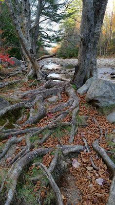 Pemigewasset River, North Woodstock, NH