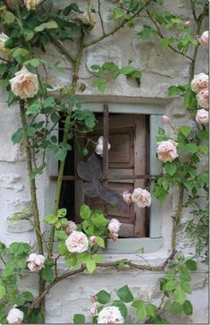 roses window.............climbing rose on cottage window...love it..:)