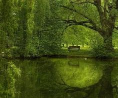 green trees, green water reflection, empty bench