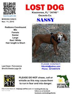 Lost Dog - Redbone Coonhound - Kissimmee, FL, United States