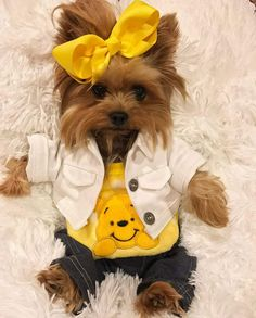 "Acquire terrific recommendations on ""yorkshire terrier"". They are offered for you on our website. Super Cute Puppies, Baby Animals Super Cute, Cute Baby Dogs, Cute Little Puppies, Cute Dogs And Puppies, Cute Little Animals, Baby Animals Pictures, Cute Animal Pictures, Chien Yorkshire Terrier"