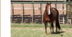 2002 stallion Im Countin Checks at Circle Y Ranch Cutting Horses – Millsap, Texas