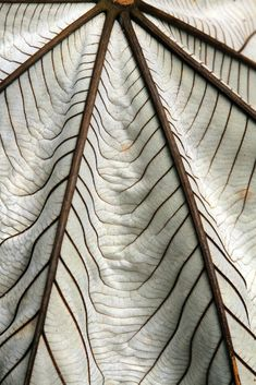 The veins of a leaf are a beautiful, intricate fall pattern.