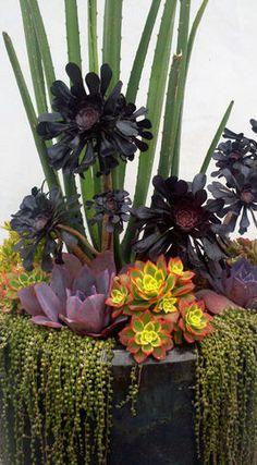 Succulent Plant Information: Succulent Landscaping, Succulent Gardening, Succulent Pots, Succulent Arrangements, Cacti And Succulents, Planting Succulents, Container Gardening, Landscaping Tips, Cactus Plants