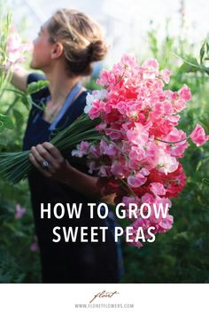 Learn the secrets to getting long stemmed sweet peas from Floret. Garden gardening flower cut flower garden cutting garden seasonal flowers blooms home gardening flower farm small farm farmer-florist floral design seasonal local seed farming microfarm