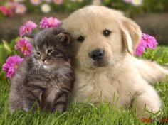 Fotos von Kätzchen und Katzen
