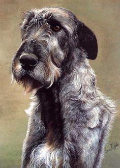 Irish Wolfhound Print by Brian Hupfield Irish Wolfhound Dogs, Giant Dogs, Dog Paintings, Dog Portraits, Dog Art, Large Dogs, Mans Best Friend, Dog Life, Dog Pictures