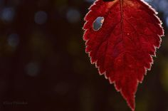 Heart of an autumn forest