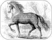 Home Remedies for Horse People