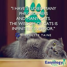 As if we didn't know... #ShareYourKitty #EasyologyPets #KittyWisdom
