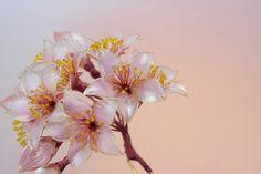 saion 「桜~華燭~」かんざし 2016年_画像1