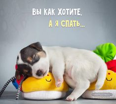 Cute Animals With Funny Captions, Cute Animals Puppies, Cute Baby Animals, Animals And Pets, Pet Dogs, Dog Cat, Jack Russell Puppies, Good Night Gif, Funny Phrases