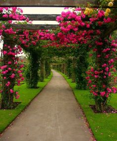 (102) •*Secret Garden *•