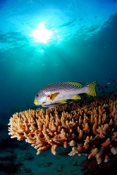 Scuba diving in the United States