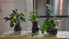 plantas-em-potes-de-vidro.jpg (700×393)