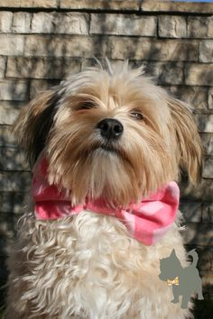 """Kit""  Named after Kit Harington; might be a little out of his norm of a black bow tie, but I think he would approve. ***pink chevron pattern"