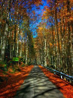 Ponte di Ganda - #Valtellina   Valtellina   Pinterest   Italy and ...