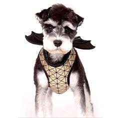 Batman 2, Large Dog Clothes, Pet Clothes, Funny Dog Memes, Funny Dogs, Pet Dogs, Dog Cat, Pets, Large Dogs
