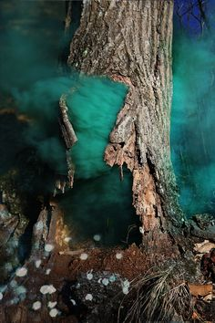 Magical Photos of the Mysterious Woods