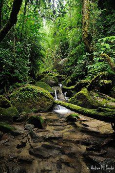 Parque Nacional Cusuco ― Honduras