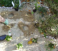 Sandarium – Magerbeet – ausführliche Baudokumentation – Hortus Girasole Plants, Gardening, Insects, Delphinium, Permaculture, Insect Hotel, Natural Garden, Lawn And Garden, Plant