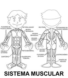 Lymphatic System Diagram Labeling Test together with Muscle Worksheets For Anatomy besides 103582860160517829 further Skeleton labeled also Biology Word Search Worksheets. on muscular system worksheets
