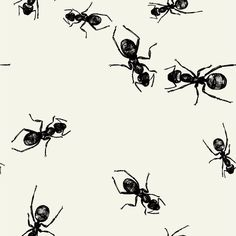 MARCHING ANTS PICNIC BEVERAGE PAPER NAPKIN – Bonjour Fête - Boutique party supplies for your next BBQ or Picnic themed birthday or event. * Free shipping over $75 US