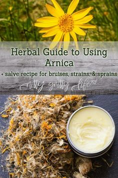 Arnica is the ultimate first aid herb for bruising, sprains, and strains. This salve is ideal for the accident prone and active athletes alike! #arnica #herbalmedicine #sportsmedicine #herbalism #herbs Cold Home Remedies, Natural Health Remedies, Herbal Remedies, Healing Herbs, Medicinal Herbs, Natural Healing, Cough Remedies For Adults, Arnica Salve, Herbs For Sleep