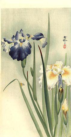 Koson OHARA (1877 - 1947) Japan 小原古邨 http://yama-bato.tumblr.com/page/891