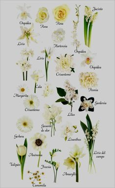 Flower names by color planning a garden pinterest flower flower names by color planning a garden pinterest flower flowers and gardens mightylinksfo