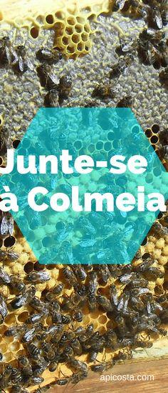 Venha aprender apicultura natural http://apicosta.com/membership-account/junte-se-a-colmeia/