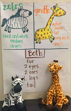 Animal-an   Animal  sorting activity