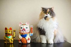 """funny, I love seeing these talking cats at restaurants.  """"Lucky Cats by Kelly West Mars"""""""