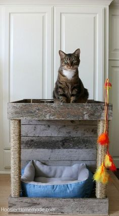 Pamper Your Cat With This Cat Condo - Made From a Wood Pallet   Hometalk   It's time to pamper our kitties a bit!