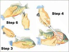 Filleting Panfish