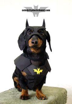 My 10 Best Dog Costumes - Crusoe the Celebrity Dachshund Dachshund Halloween Costumes, Dachshund Costume, Best Dog Costumes, Pet Costumes, Batman Halloween, Bear Halloween, Halloween 2016, Costume Halloween, Happy Halloween
