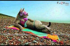 Кошечка на пляже