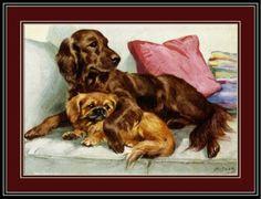 English-Picture-Poster-Print-Irish-Setter-Pekingese-Dog-Dogs-Puppy-Puppies-Art