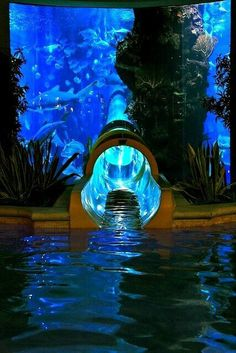 Water Slide through a exoctic fish tank