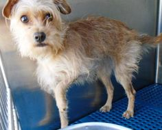 Animal ID\t34190599 \r\nSpecies\tDog \r\nBreed\tTerrier\/Mix \r\nAge\t1 day \r\nGender\tUnknown \r\nSize\tSmall \r\nColor\tTan \r\nSite\tCity of El Paso Animal Services \r\nLocation\tSally Port \r\nIntake Date\t12\/10\/2016 \r\n