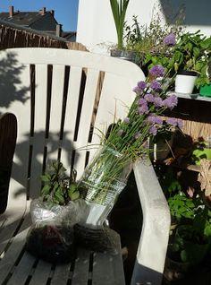 Gemüse & Naschen: Neue Kräuter aus dem heimischen Garten