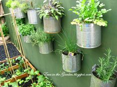 Repurpose old cans for a wall-friendly herb garden! #DIY #upcycle #gardening