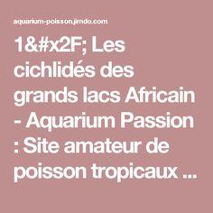 1/ Les cichlidés des grands lacs Africain - Aquarium Passion : Site amateur de poisson tropicaux d'eau douce.