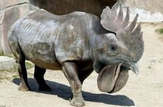 These 30 Animal Hybrids Will Blow Your Mind Except 6 I Just Want To Hug That Thing