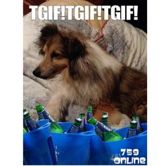 TGIF! Tag #759onlinepetfeed for share ! Tgif, Dogs, Animals, Animales, Animaux, Pet Dogs, Doggies, Animal, Dog