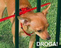 Colete anti-fuga para Pets