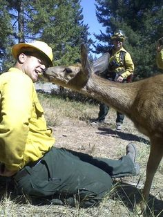 A deer who survived the Taylor Bridge Wildfire is a little thin, but she's overcome her shyness and befriended one of the firefighters.