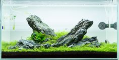 My home iwagumi aquarium | by petiteplanet