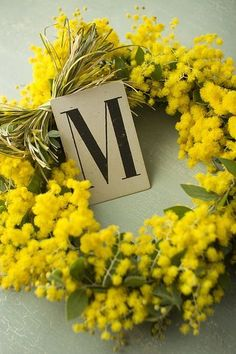 M for Mimosa Acacia Dealbata, Le Mimosa, Mimosas, Arte Floral, Mellow Yellow, Belle Photo, Daffodils, Door Wreaths, Yellow Flowers