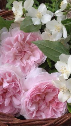 Simply beautiful, roses and mock orange blossom Pretty Flowers, Fresh Flowers, Pink Roses, Pink Flowers, Pink Peonies, Pale Pink, Parfum Rose, English Roses, Flower Pictures